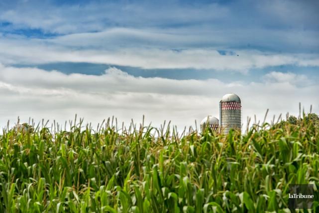Un homme a perdu la vie mardi matin après être tombé dans un silo à grains sur... (Photo Jocelyn Riendeau, archives La Tribune)