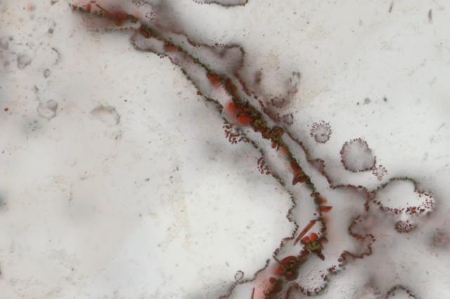 Des micro-organismes fossiles qui auraient entre 3,77 et... (ARCHIVES REUTERS)