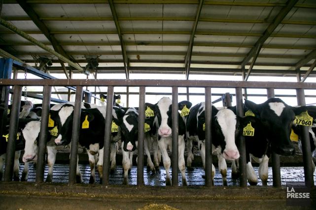 Les émissions globales de méthane dans l'atmosphère ont... (PHOTO DAVID BOILY, ARCHIVES LA PRESSE)