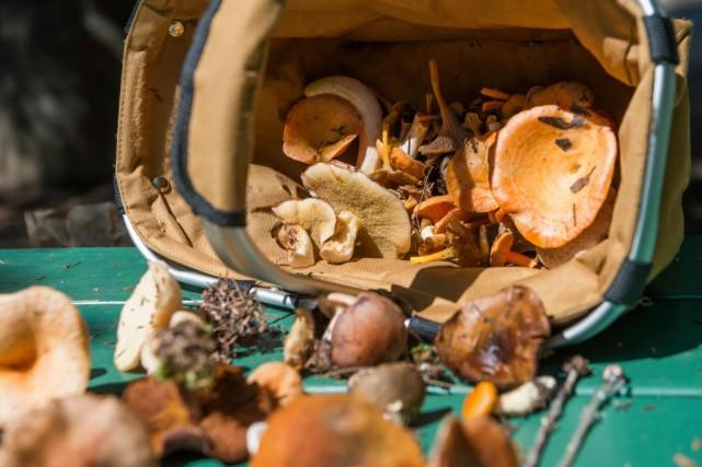 Ce n'est un secret pour aucun mycologue :le... (Photo Catherine Lefebvre, collaboration spéciale)