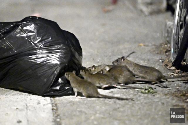 Les résidants de la rue Saint-Urbain se plaignent... (Photo Bernard Brault, La Presse)