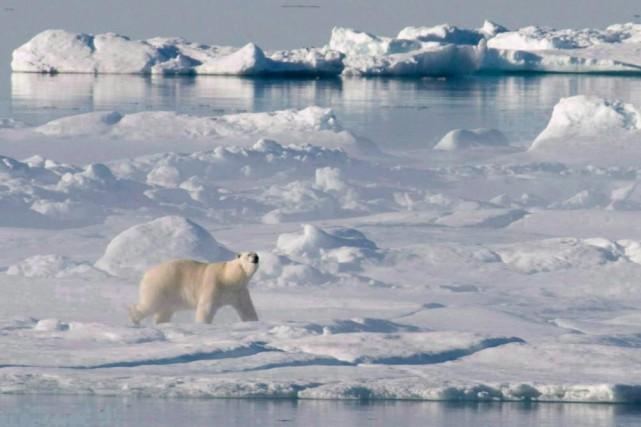 Un ours blanc de la baie de Baffin... (PHOTO ARCHIVES PC)