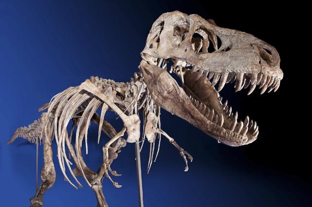 Cette nouvelle espèceappartient au groupe de dinosaures «méga-théropodes»,... (ARCHIVES REUTERS)
