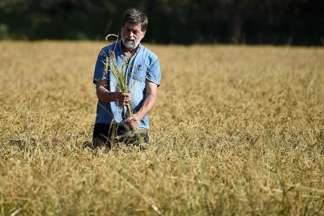 Le riziculteur Bernard Poujol se tient au milieu... (PHOTO SYLVAIN THOMAS, AGENCE FRANCE-PRESSE)