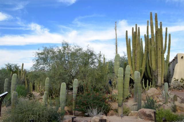 Toutes les sortes, ou presque, de cactus du... (Photo Muriel Françoise, collaboration spéciale)