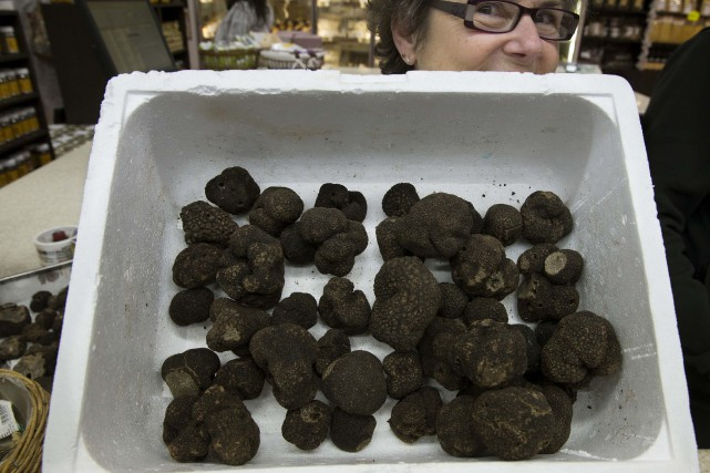 Des truffe noire Tuber melanosporum.... (Photo Philippe Wojazer, archives REUTERS)