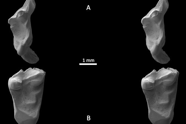 Ces dents appartenaient à de petites créatures à... (Photo Agence France-Presse)