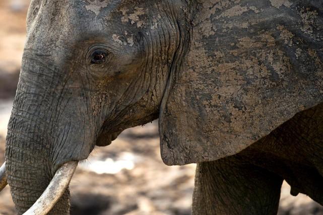 Les associations de défense des animaux et de... (AFP)