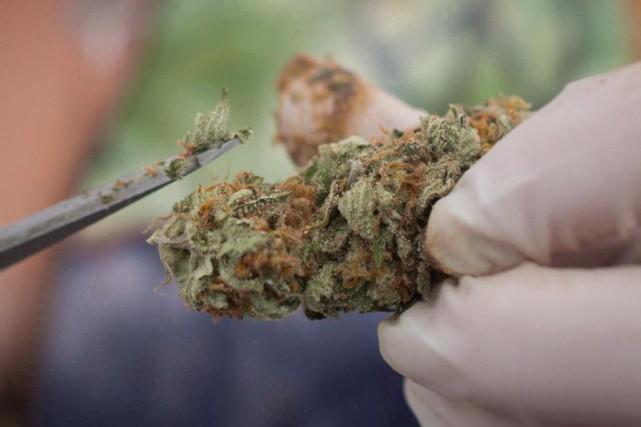 Le projet de loi pour encadrer la légalisation... (PHOTO DARRYL DYCK, ARCHIVES LA PRESSE CANADIENNE)