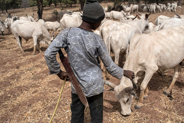 La région de Numan, avec ses terres fertiles... (AFP)
