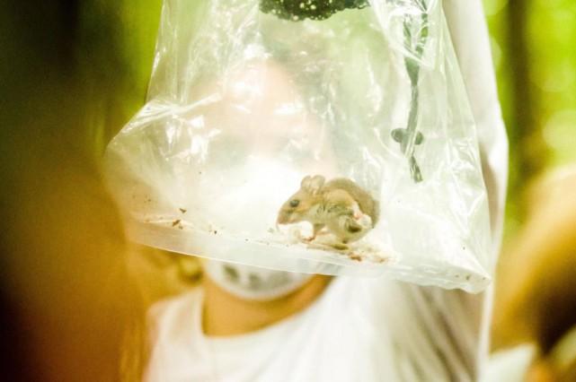 Souris à pattes blanches capturée par la biologiste... (Photo fournie par Alex Tran)