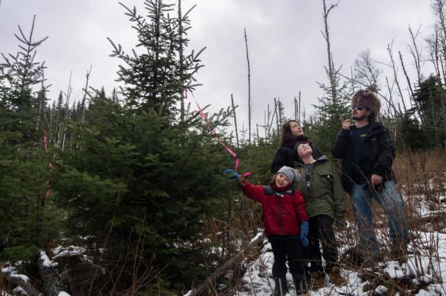 «Viens couper ton sapin de Noël» est une... (PHOTO FOURNIE PAR L'UNIVERSITÉ LAVAL)