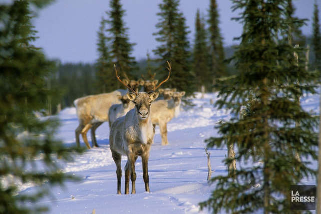 La création d'aires protégées est l'une des mesures... (Photo Archives La Presse)