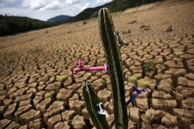 Les cactus du typesous-espèces Opuntia ficus-indica (figuier de... (REUTERS)
