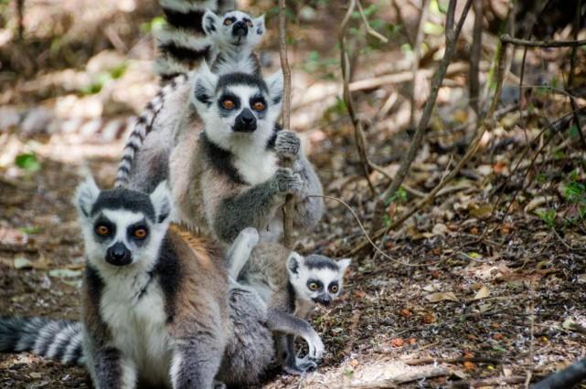 L'île de Madagascar a tellement à offrir que... (Photo Alexandre Piché, collaboration spéciale)