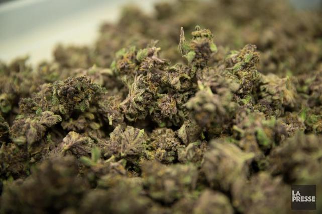 Alors que le Canada s'approche de la légalisation... (photoIVANOH DEMERS, archives LA PRESSE)