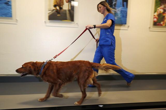 La vingtaine de chiens inscrits à l'étude de... (David Zalubowski, archives AP)