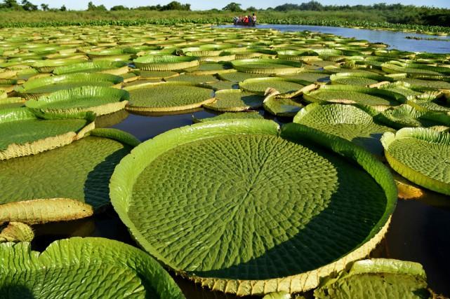 Une boucle de la rivière Paraguay est devenue... (Photo AFP)