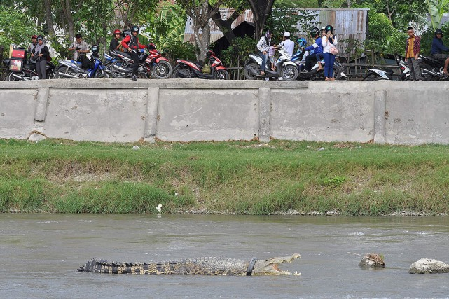 Le crocodile a été récemment aperçu en train... (ARFA, AFP)