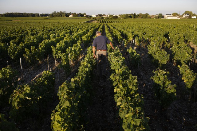Le vigneron Jean-François Fillastre dans son vignoble du... (Photo archives The New York Times)