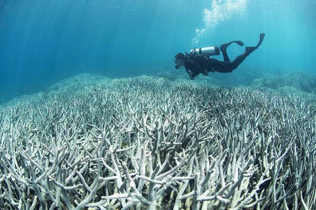 La Grande Barrière de coraila récemment subi plusieurs... (XL CATLIN SEAVIEW SURVEY VIA AFP)