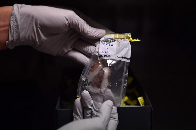 Chaque échantillon de corail, de plancton, d'algues ou... (CHRISTOPHE ARCHAMBAULT, ARCHIVES AFP)
