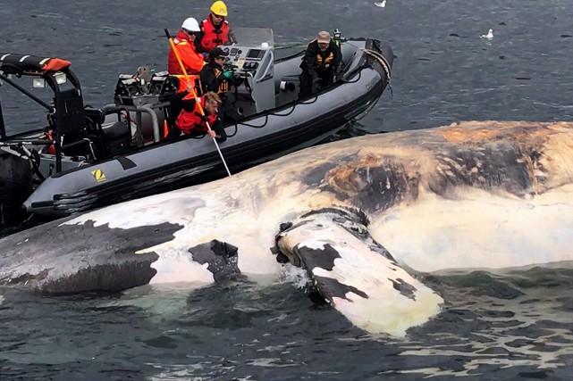 Sur cette photo, des chercheurs examinent le corps... (Photo Marine Animal Response Society)