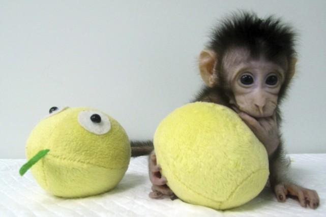 Les deux petites femelles - Zhong Zhong et... (PHOTO AP)