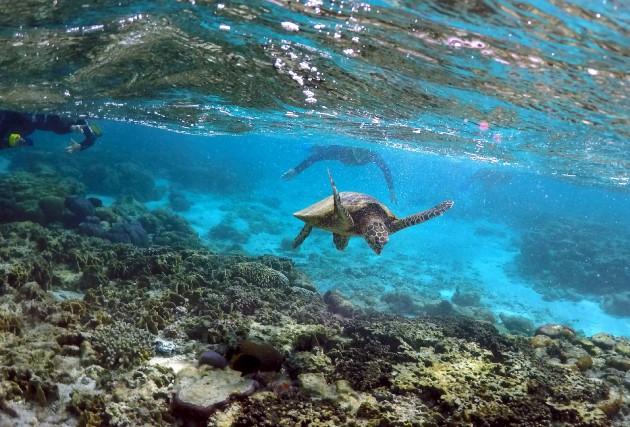 Les récifs coralliens forment un écosystème crucial en... (ARCHIVES REUTERS)