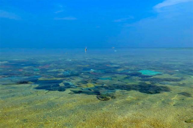 Les débris de plastique coincés dans les récifs coralliens augmentent...