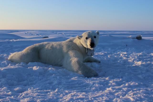 L'Arctique se réchauffe deux fois plus rapidement que... (PHOTO REUTERS)