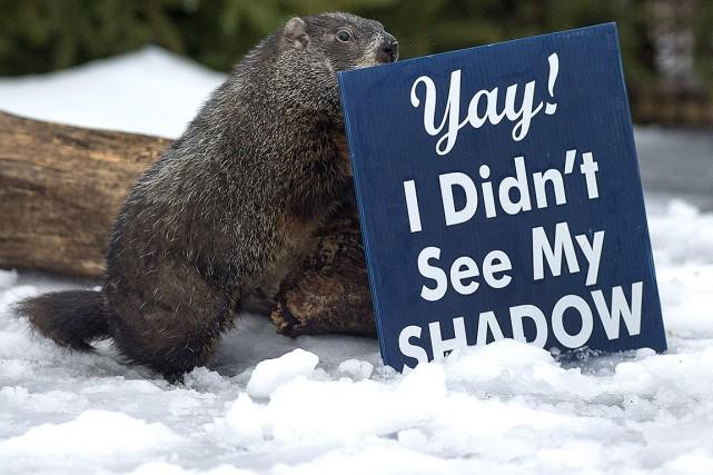 En Nouvelle-Écosse, le célèbre Shubenacadie Sam s'est promené... (Andrew Vaughan, archives PC)