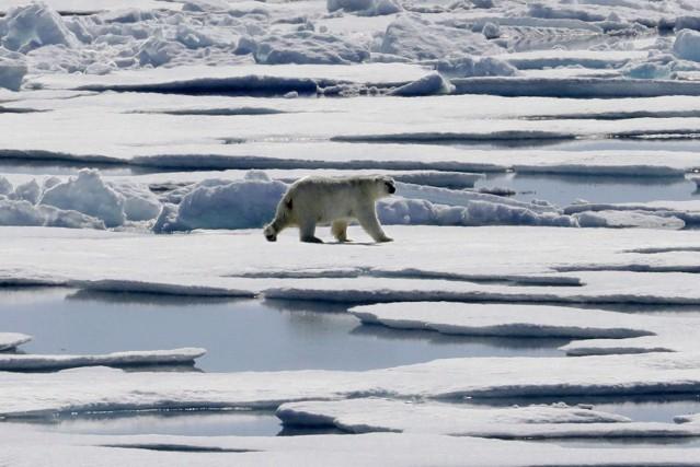 La population d'ours polaires a diminué d'environ 40%... (Photo David Goldman, AP)