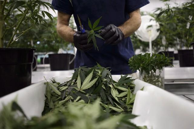 Canopy Growth a indiqué avoir observé une hausse... (Photo Sean Kilpatrick, La Presse canadienne)