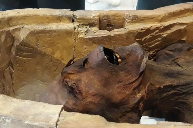Selon le ministère égyptien des Antiquités, les analyses... (PHOTO KHALED DESOUKI, AFP)