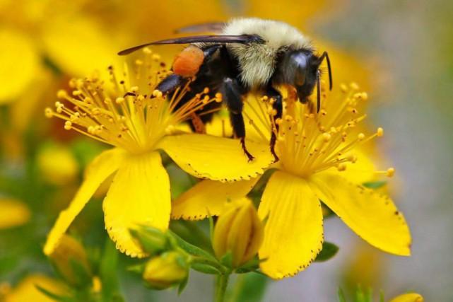 Le gouvernement Couillard resserre l'usage de cinq pesticides... (PhotoRobert F. Bukaty, La Presse Canadienne)