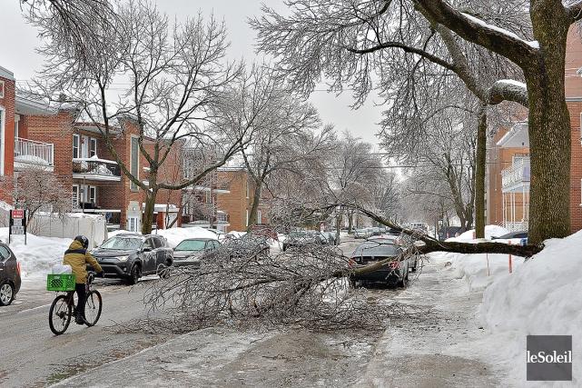 De nombreux arbres ont cédé sous le poids... (Patrice Laroche, Le Soleil)