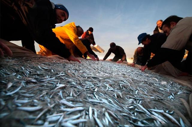 Une nouvelle étude américaine révèle que la surpêche est moins importante que... (ARCHIVES REUTERS)