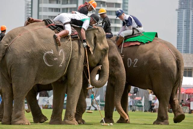 Les montures sont pour la plupart des pachydermes... (Photo Krit Phromsakla, AFP)