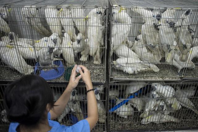 Parmi les animaux saisis figuraient également sept oiseaux... (PHOTO NOEL CELIS, AFP)