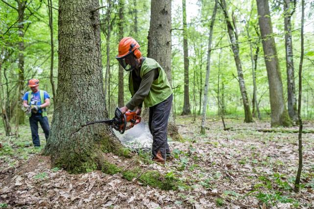Bialowieza, forêt millénaire, «irremplaçable pour la conservation de... (Photo WOJTEK RADWANSKI, archives Agence France-Presse)