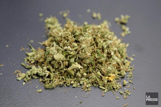 Une expansion des lieux de vente de cannabis déjà envisagée à Montréal