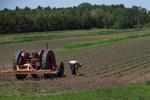 Le portefeuille agricole de laBanque Laurentienne compterait environ... (Photo Ivanoh Demers, Archives La Presse)