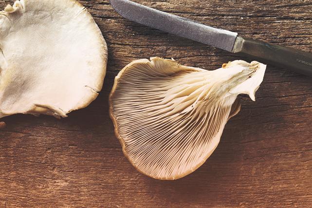 Le chercheur David Dussault possède une champignonnière gourmet à Saint-Ours,...