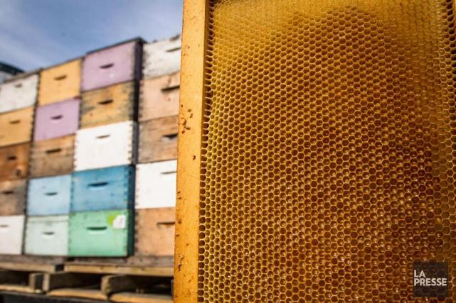 http://www.lapresse.ca/environnement/201805/14/01-5181738-hiver-fatal-pour-les-abeilles-quebecoises.php