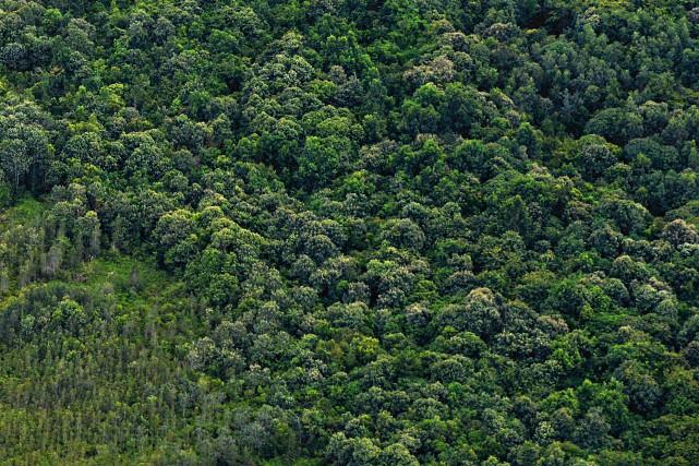 Greenpeace reproche à la compagnie d'avoir poursuivi ses... (Photo Bay ISMOYO, archives Agence France-Presse)