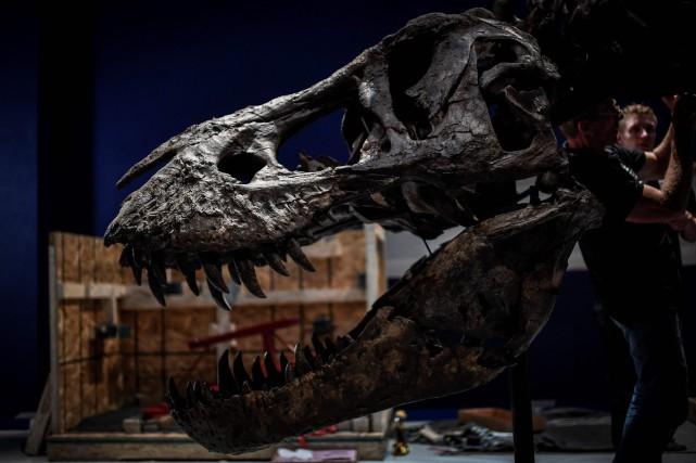 La tête d'un tyrannosaure rex dont le squelette... (PHOTO  STEPHANE DE SAKUTIN, AFP)