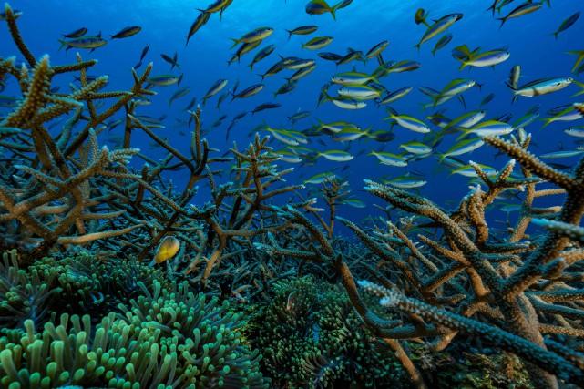 «C'est 400heures dans l'eau sur deux années. Au... (Photo Alexis Rosenfeld, via Agence France-Presse)