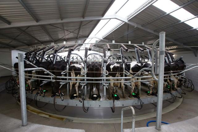 «Comme les producteurs de lait dans tout l'est... (Bloomberg)