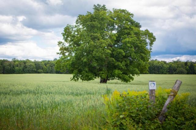 Selon Robert Mineau, l'arbre idéal est «sans entretien,... (PHOTO SIMON GIROUX, ARCHIVES LA PRESSE)